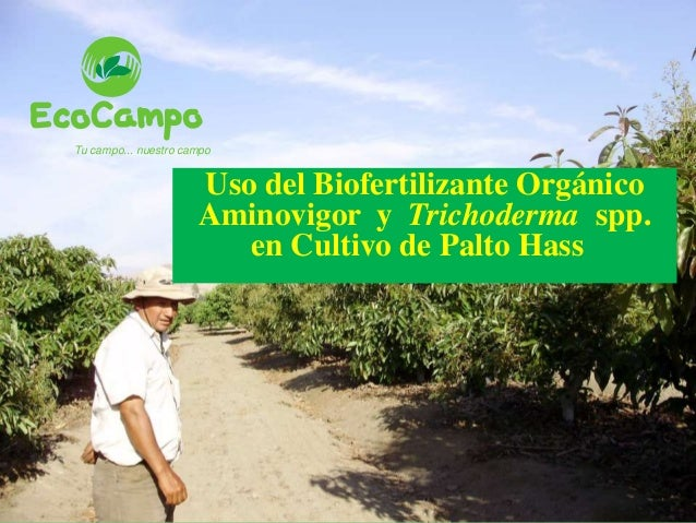 Tu campo... nuestro campo Uso del Biofertilizante Orgánico Aminovigor y Trichoderma spp. en Cultivo de Palto Hass