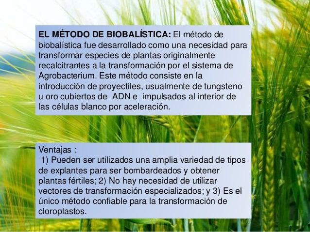 Uso de plantas transg nicas en el control de enfermedades - Enfermedades de las plantas de interior ...