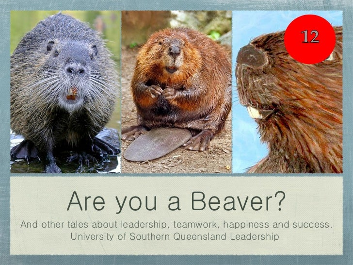 Are you a Beaver? <ul><li>And other tales about leadership, teamwork, happiness and success. </li></ul><ul><li>University ...