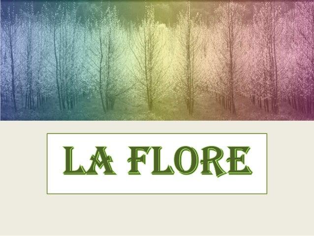 Une plante se compose généralement de: - Racines - Tiges - Feuille s - Fleurs - Fruits