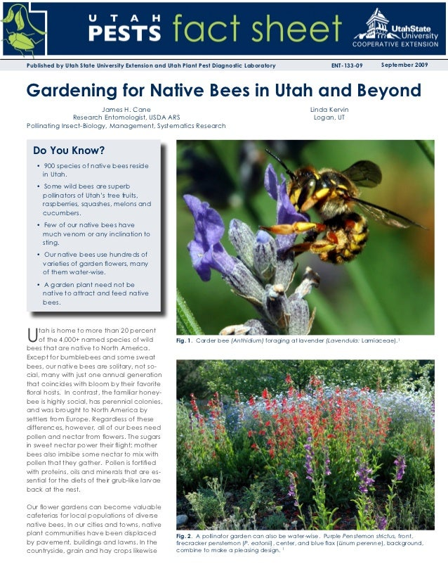 Gardening for Native Bees in Utah and Beyond