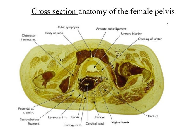 Function of anatomy