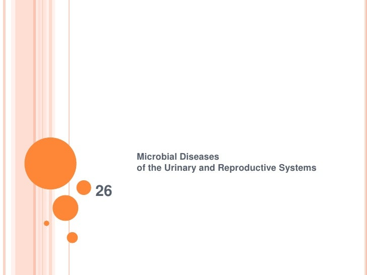 26<br />Microbial Diseases of the Urinary and Reproductive Systems<br />