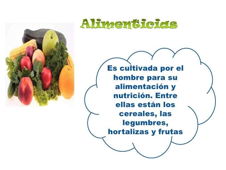 Utilidad de las plantas for Frutas ornamentales