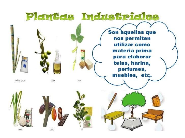 Plantas  Industriales<br />Son aquellas que nos permiten utilizar como materia prima  para elaborar telas, harina, perfume...