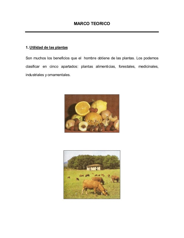 Utilidad de las plantas planta medicinal chupasangre for Utilidad de las plantas ornamentales