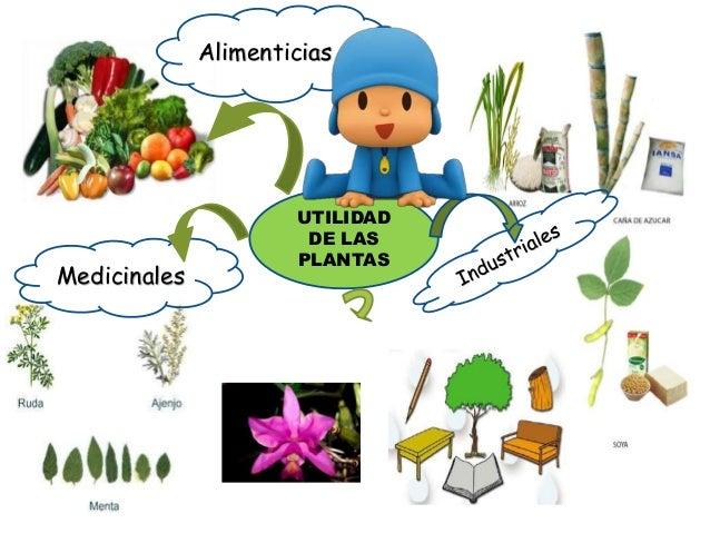 Utilidades de las plantas - Cosas sobre las plantas ...