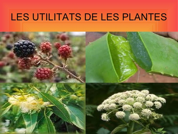 LES UTILITATS DE LES PLANTES
