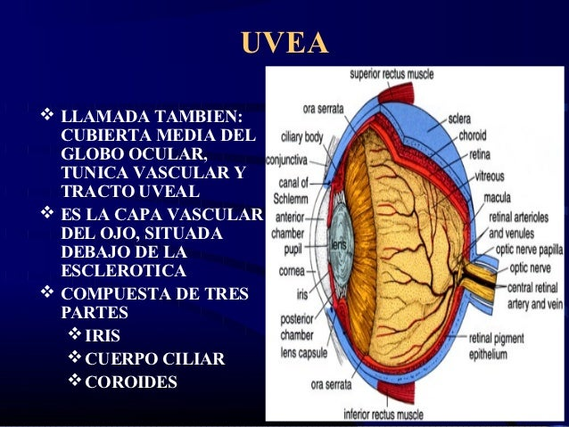 uveal tract