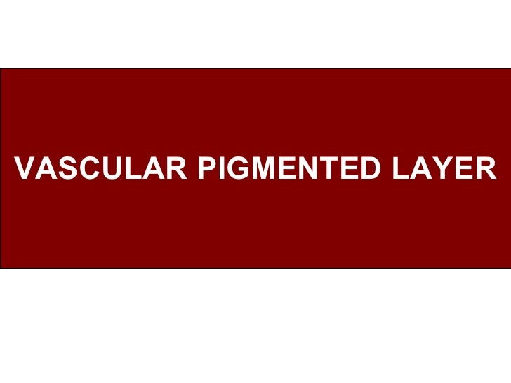 VASCULAR PIGMENTED LAYER
