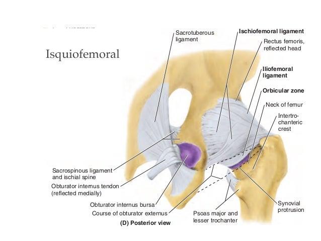 tendinose schouder