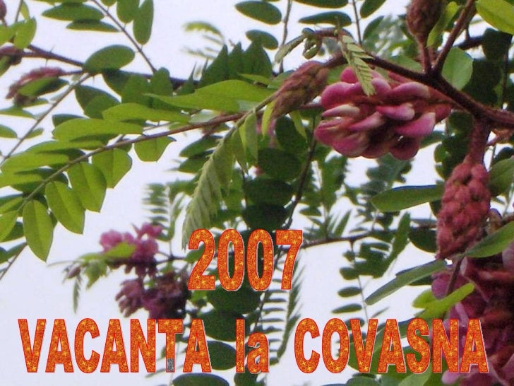 VACANTA  la  COVASNA 2007