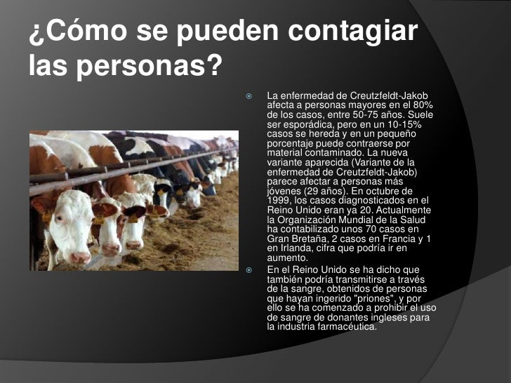 Rudolf Steiner pronosticó sobre las vacas locas Vacas-locas-muy-locas-7-728
