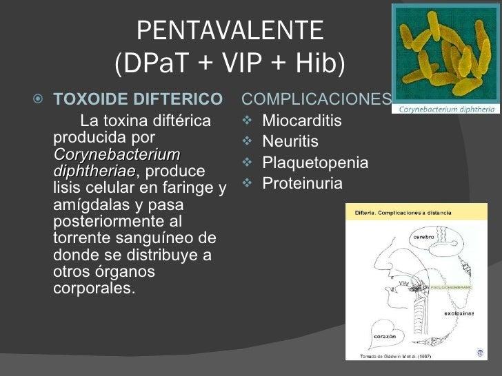 PENTAVALENTE (DPaT + VIP + Hib) <ul><li>TOXOIDE DIFTERICO </li></ul><ul><li>La toxina diftérica producida por  Corynebacte...