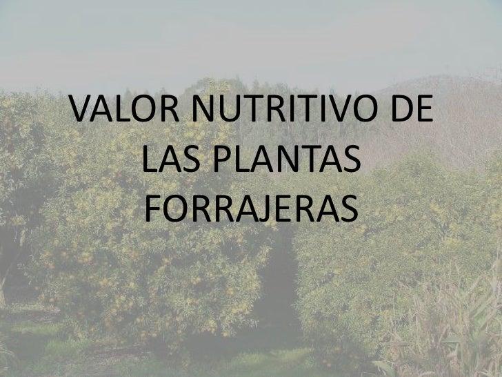 VALOR NUTRITIVO DE   LAS PLANTAS   FORRAJERAS