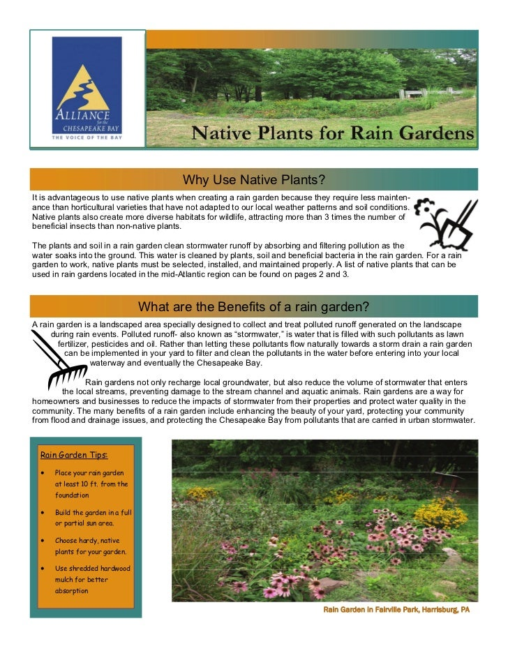 Why Use Native Plants?It is advantageous to use native plants when creating a rain garden because they require less mainte...