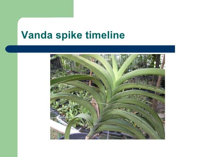 Vanda spike timeline