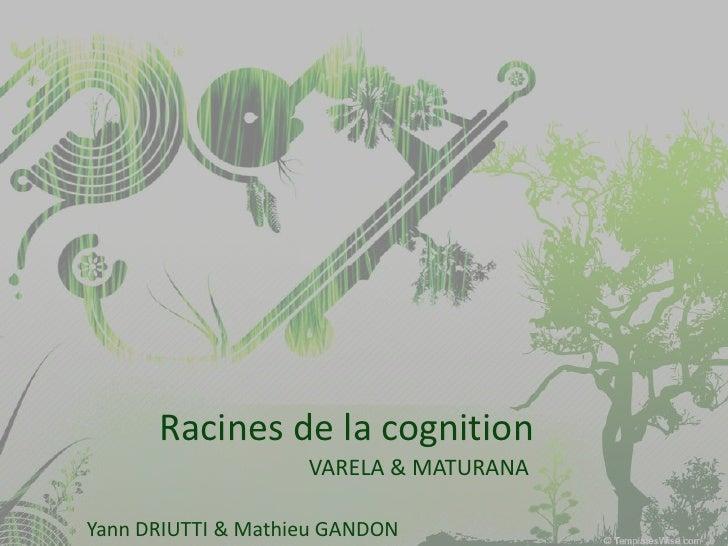 Racines de la cognition                     VARELA & MATURANA  Yann DRIUTTI & Mathieu GANDON