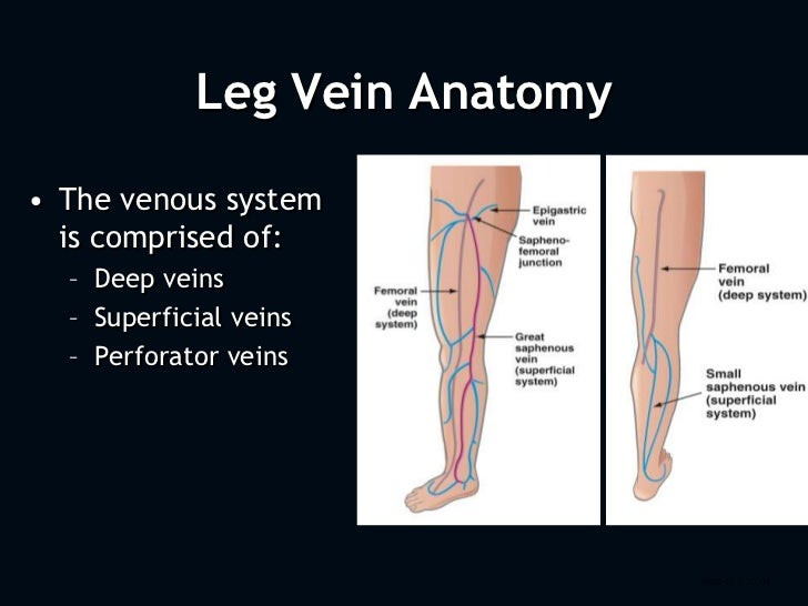 Behind knee anatomy