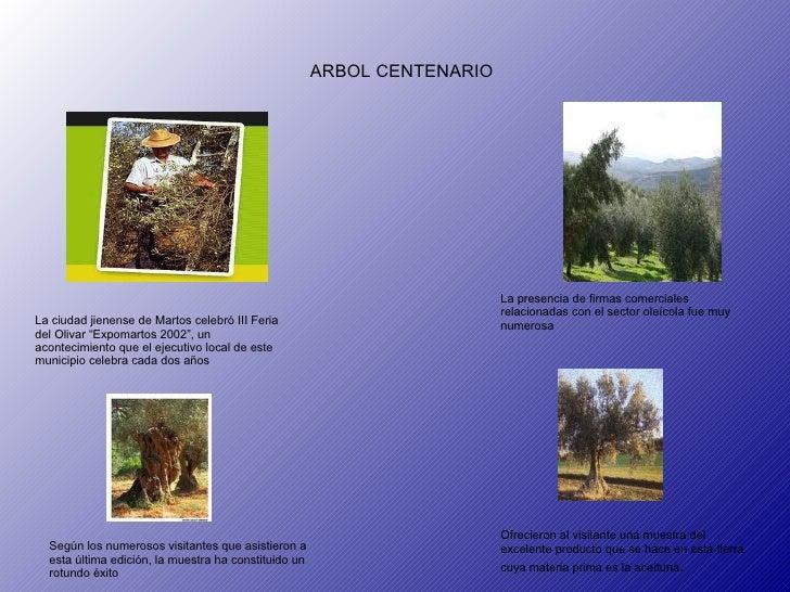 """ARBOL CENTENARIO La ciudad jienense de Martos celebró III Feria del Olivar """"Expomartos 2002"""", un acontecimiento que el eje..."""