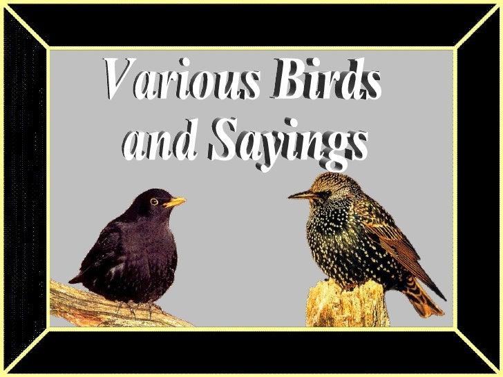 Various Birds & Sayings