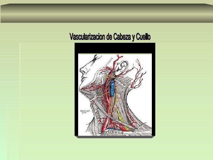 TrayectoNace     ascendente      del   cayado      aortico   se   dirigeoblicuamente de abajo arriba, de dentro afuera y d...