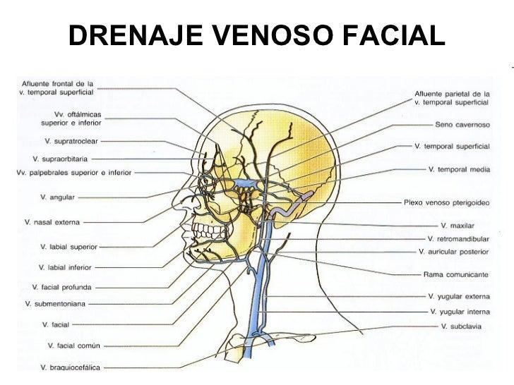 Vitaminas de pele de cara de envelhecimento