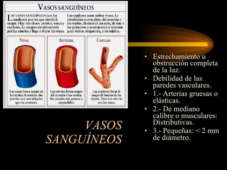 Vasos sanguíneos(2)