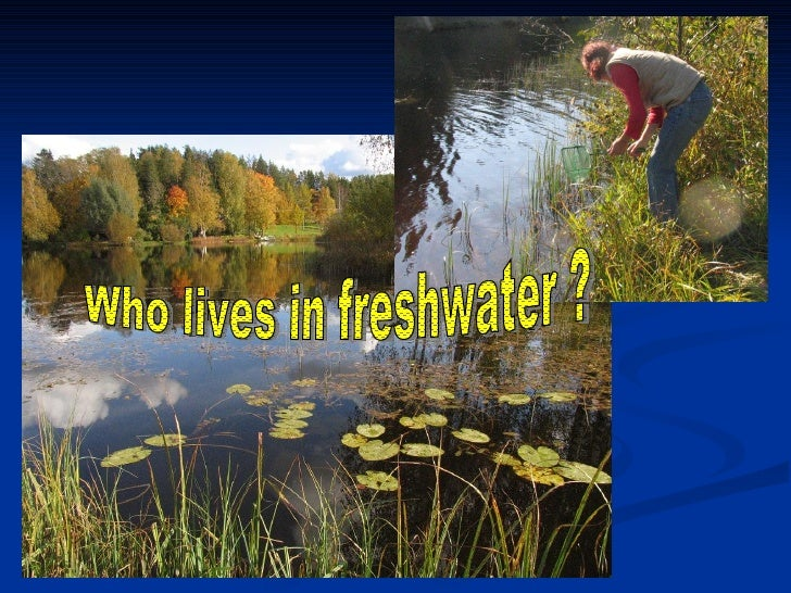 Who lives in freshwater ?
