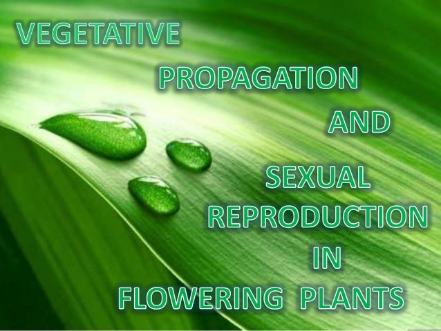 Vegeative propagation and sexual repro. in flowers