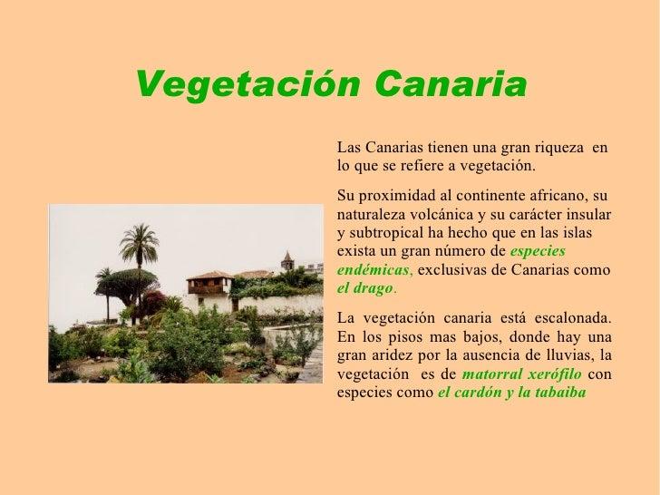 Vegetaci n canaria for Tipos de arboles y caracteristicas