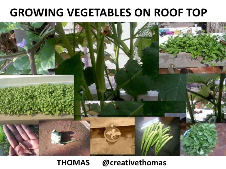 GROWING VEGETABLES ON ROOF TOP<br />THOMAS  @creativethomas<br />