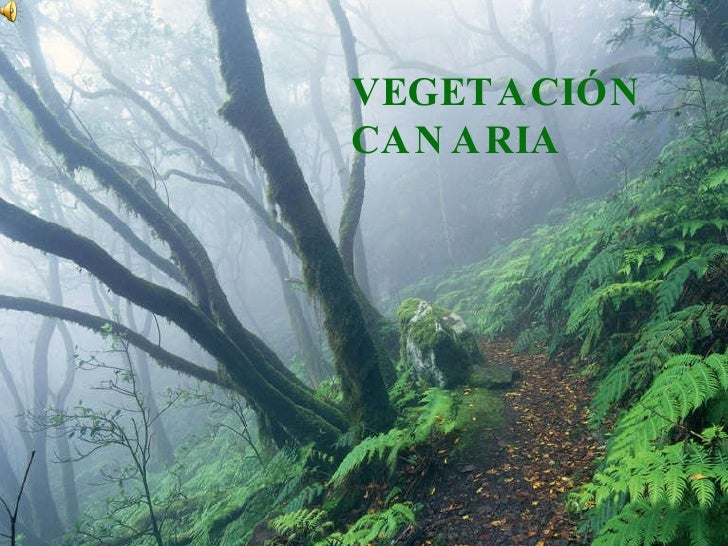 VegetacióN Canaria
