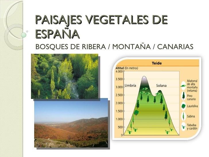 PAISAJES VEGETALES DE ESPAÑA  BOSQUES DE RIBERA / MONTAÑA / CANARIAS