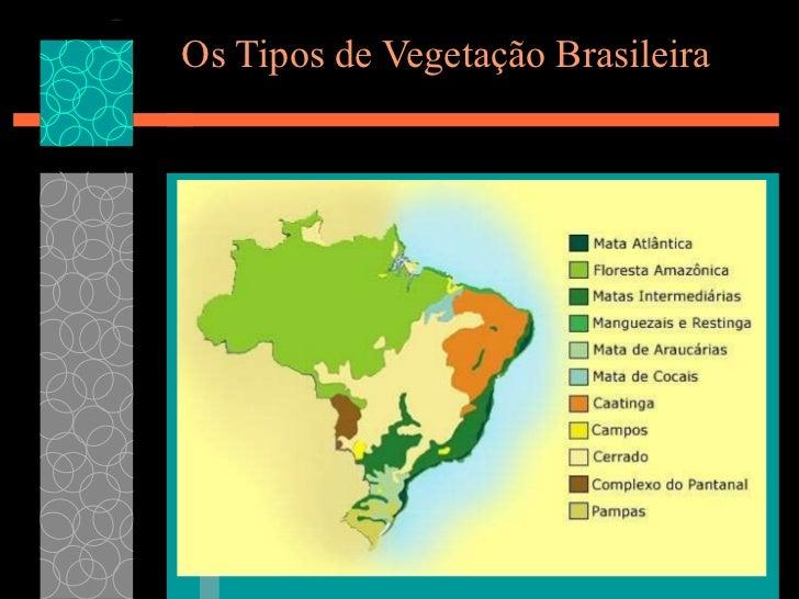 Os Tipos de Vegetação Brasileira