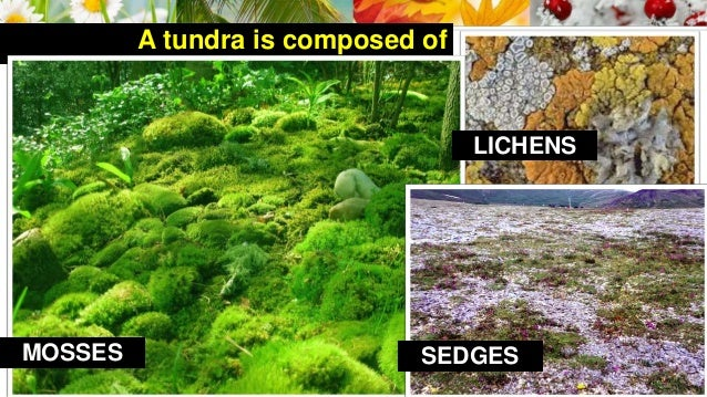 Lesson 18 Vegetation Of The Earth on tundra water