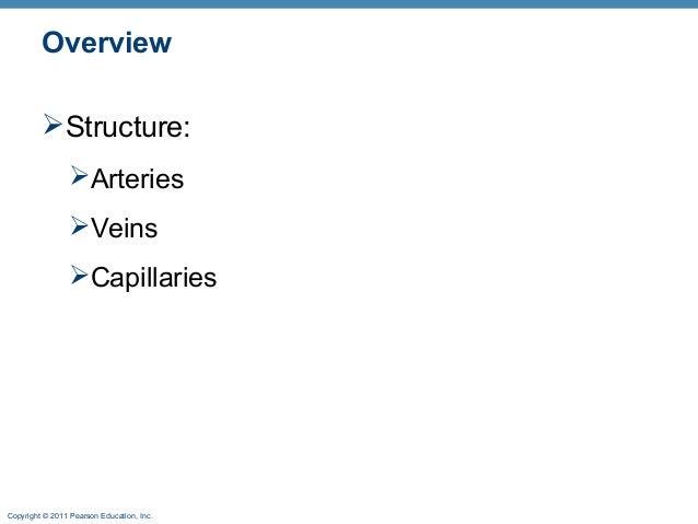 Veins arteries online