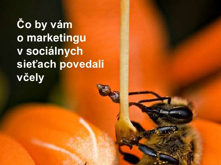 Čo by vám <br />o marketingu<br />v sociálnych sieťach povedali včely<br />