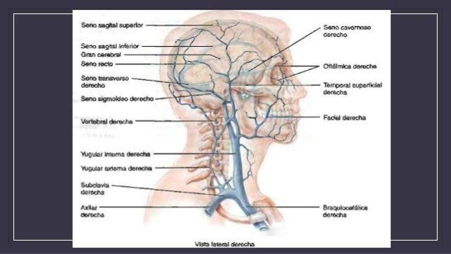 Sheynyy la osteocondrosis de la hormiguita por la cabeza