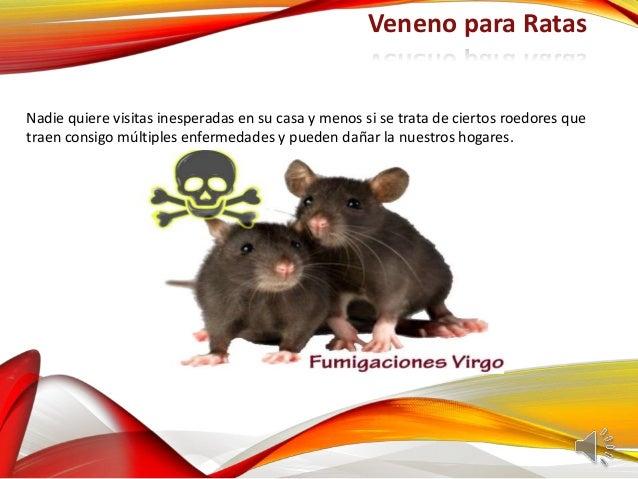 Veneno para ratas - Como alejar las ratas de la casa ...