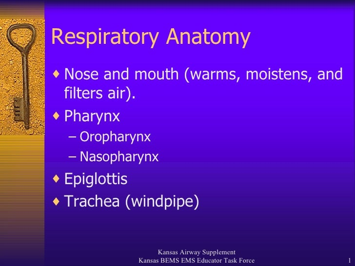 Respiratory Anatomy <ul><li>Nose and mouth (warms, moistens, and filters air). </li></ul><ul><li>Pharynx </li></ul><ul><ul...