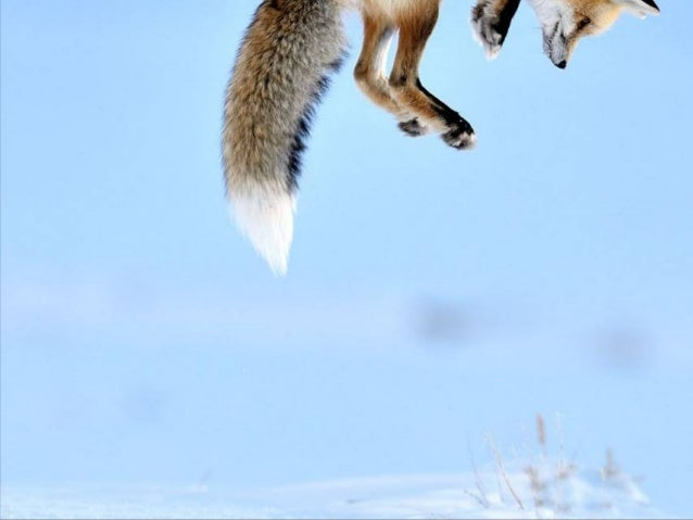 cast            Veolia Environnement wildlife photographer of the year 2012images credit    www.Music           Over the R...