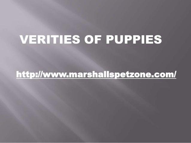 VERITIES OF PUPPIES http://www.marshallspetzone.com/