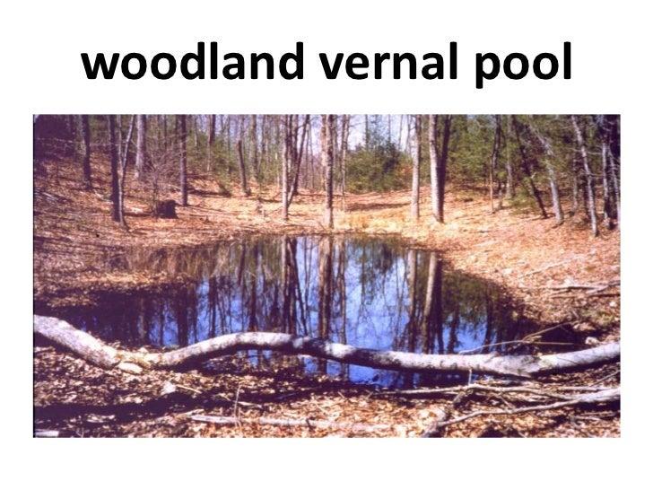 woodland vernal pool