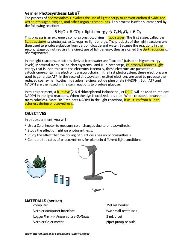 photosynthesis lab report