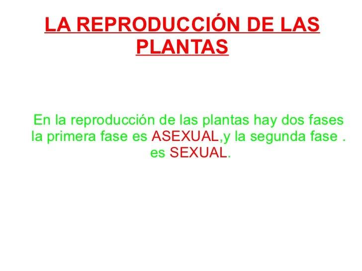 LA REPRODUCCIÓN DE LAS PLANTAS En la reproducción de las plantas hay dos fases la primera fase es  ASEXUAL ,y la segunda f...