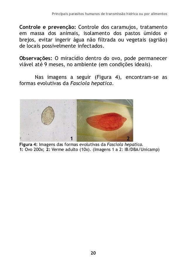 Existência de parasitas em um tratamento de corpo humano