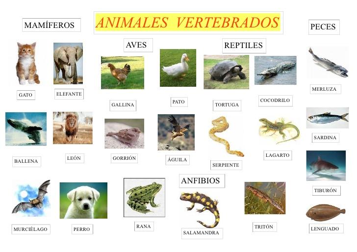 DIVERCLASE: TEMA 4 LOS ANIMALES