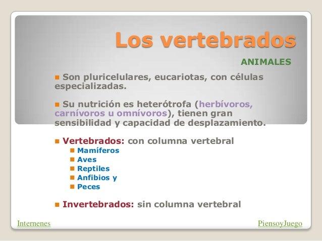 Los vertebrados ANIMALES  Son pluricelulares, eucariotas, con células especializadas.  Su nutrición es heterótrofa (herb...