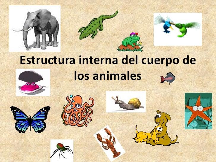 Estructura interna del cuerpo de          los animales